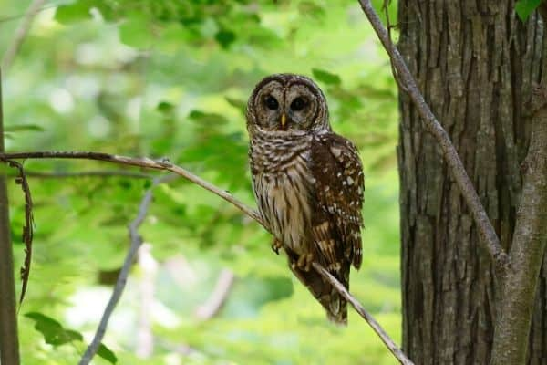 image of an owl on a tree in the park